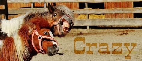 horses-1348616_1920