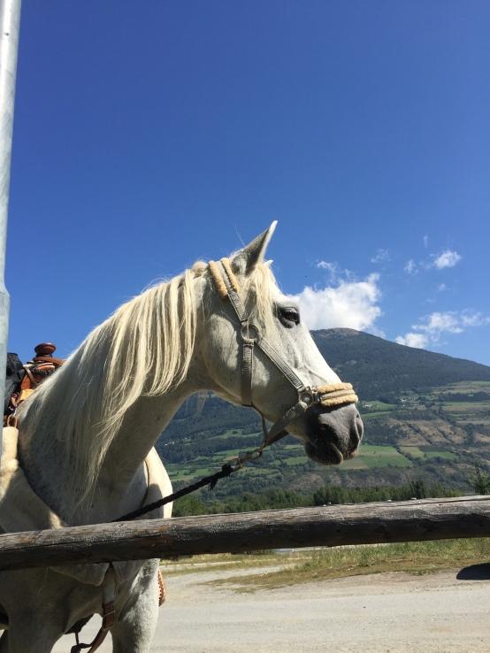 Das beste Pferd der Welt